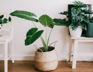 best artificial plants for outdoors in india