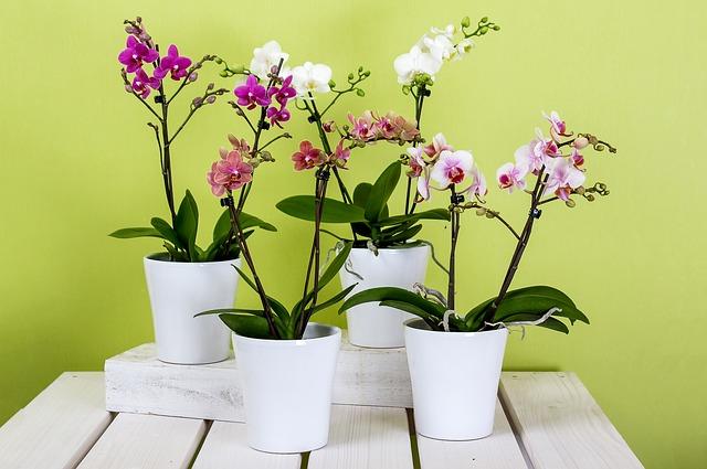 Best Plastic Plant Pots